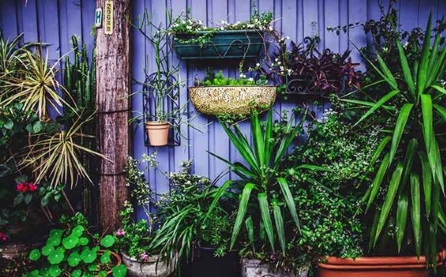 Urban gardens - convert your empty space