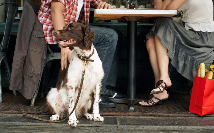 savills blog: Dinner with Man's Best Friends
