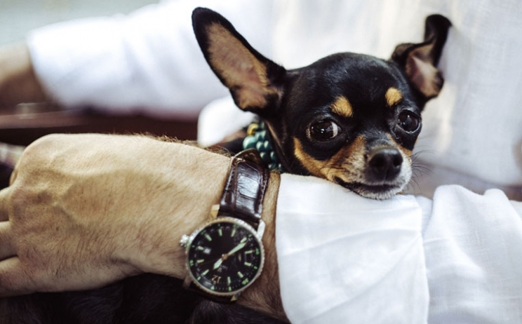 Pets in the office: is it just a fad or a does it deliver real benefit?